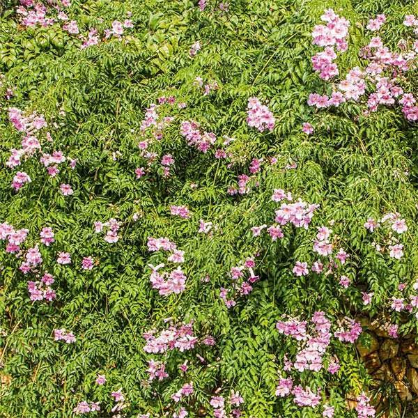 Balkonbanner Natur Blumen Motiv Lola