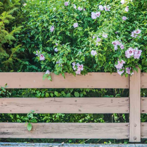 Gartensichtschutz Motiv Diva