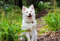 Bedruckter Zaun Sichtschutz Motiv Hundewelpe