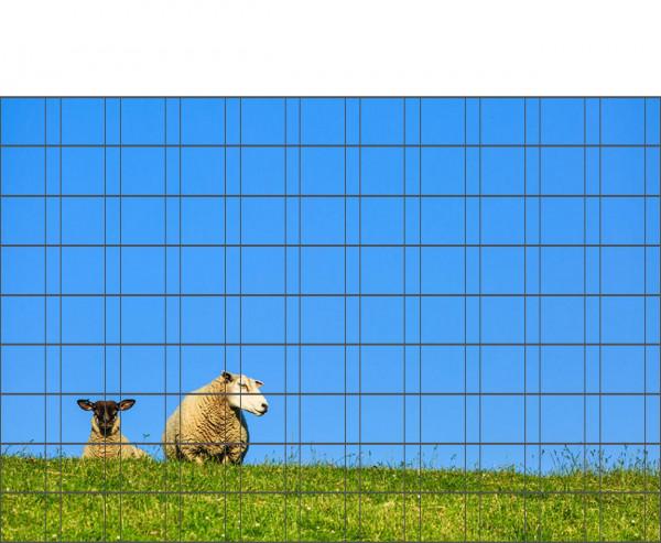 Bedrucktes Zaunposter Sichtschutz Motiv Schafe 9 Streifen