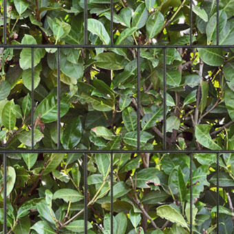 PES Sichtschutzstreifen Motiv Kirschlorbeer Detailansicht