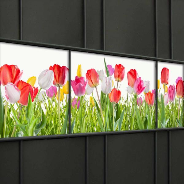 Frühlingsmotiv Tulpen als Dekoration für den Gartenzaun