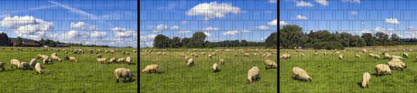 XXL Panorama Zaunposter Sichtschutz Motiv Schafherde
