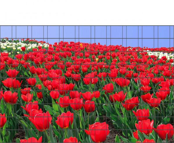 Bedrucktes Zaunposter für Gittermatten Tulpen-Motiv mit 9 Streifen