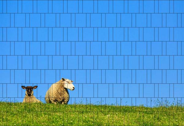 Bedruckter Zaun Sichtschutz Motiv Schafe