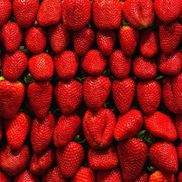 Gartenbanner Berry