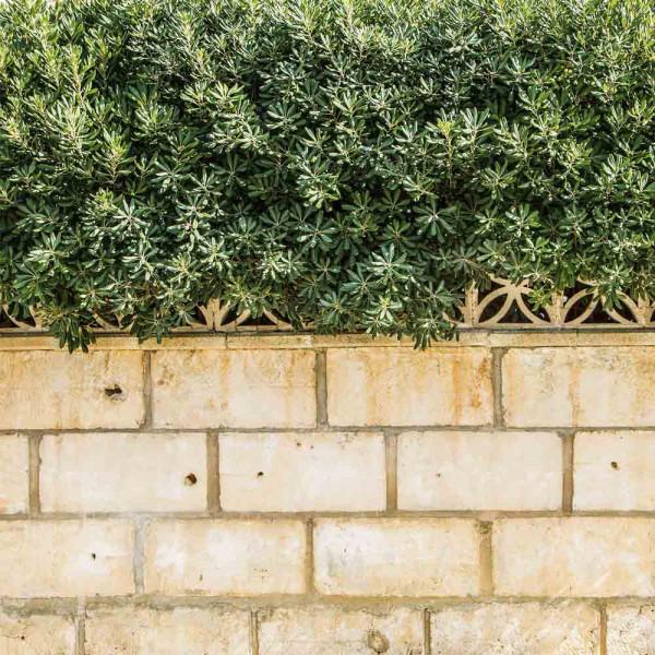 Gartenbanner Motiv Terence