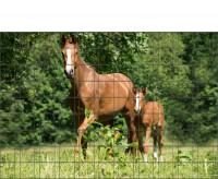 Bedrucktes Zaunposter Sichtschutz Pferde Motiv 9 Streifen