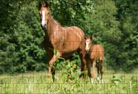 Bedruckter Zaun Sichtschutz Motiv Pferde